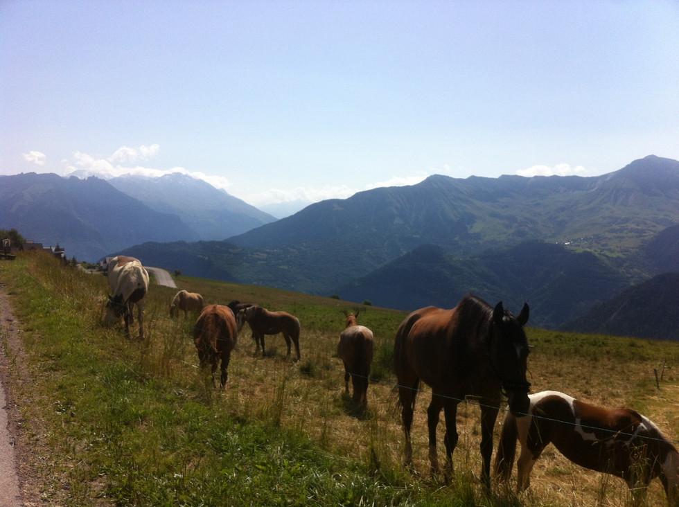 Alps - horses.jpg