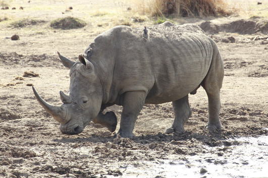 South Africa: Rhino and Lion Reserve, Wonder Caves.