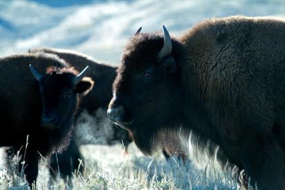 USA Wyoming: Cheyenne, Cody, Yellowstone National Park, Grand Tetons