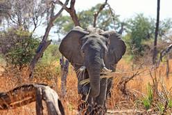 South Africa: Cape Town, Hermanus, Knysna, Kariega Safari, Cango Caves, Kynsna Head, Feather Bed Nature Reserve, Ostrich Farm, Boulders Beach.