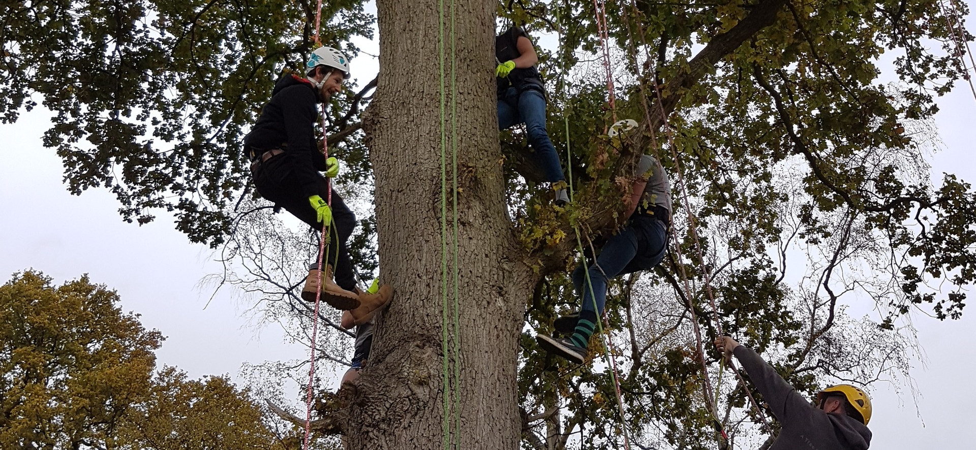 Canopy - Tree climbing promotes team building