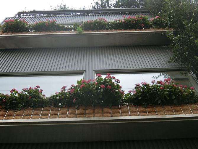 窓辺のフラワーボックス