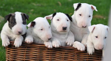 De pups van 2016