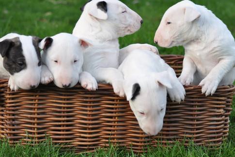 5 Pups