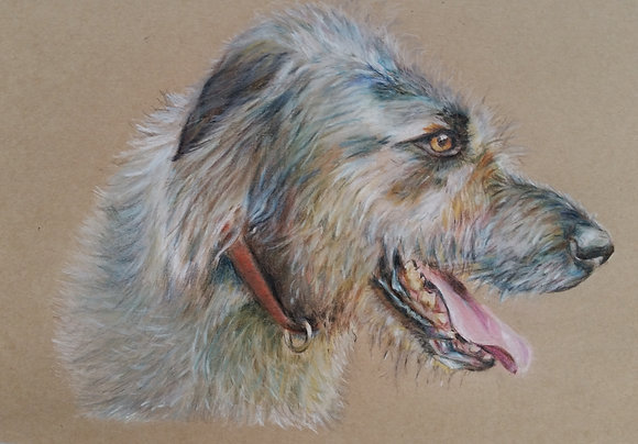 Archie the Wolfhound