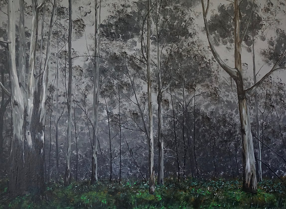 Winter in Macedon Forest