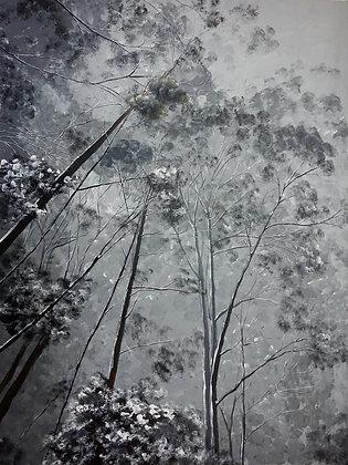 Snowy Macedon