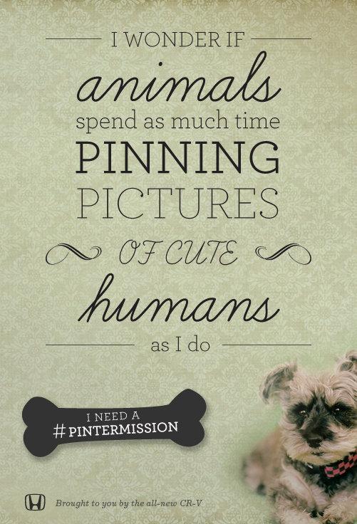 3_Animals.jpg