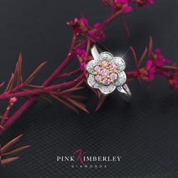 PINK KIMBERLEY