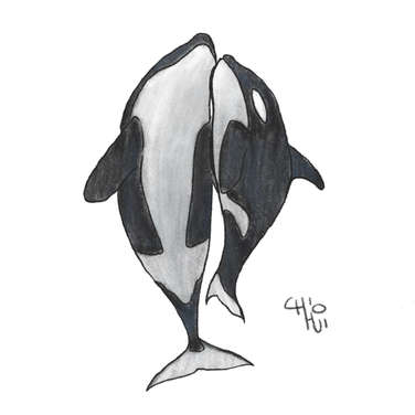 Orca Whale parent and child