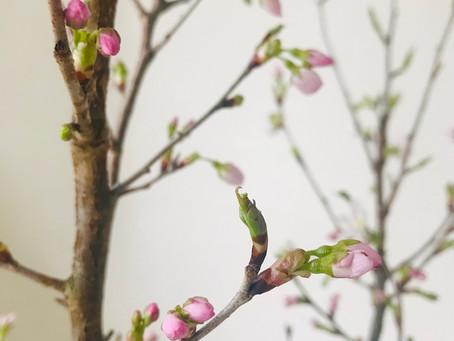 春もうすぐですね