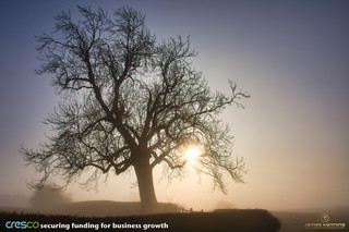 Cresco - Leicestershire Tree