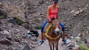 Mule ride in Imlil village