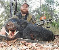 Greg Salter Aussie Pig2_edited.jpg
