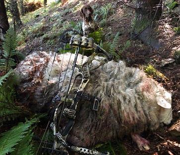 Scott Lovelock Wild Sheep_edited_edited.