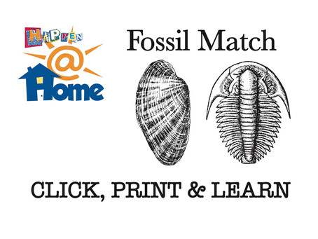 Happen@HOME FOSSIL MATCH