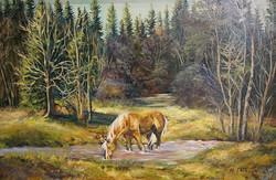 Jackson -Lacamas Creek