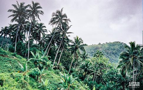 Vanuatu Pentecost