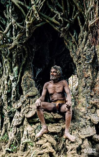 Banyan Tree Sali