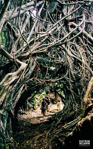 Banyan Tree_04