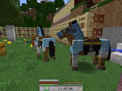 Ride Horses