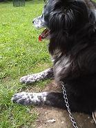 Staceys dog 2