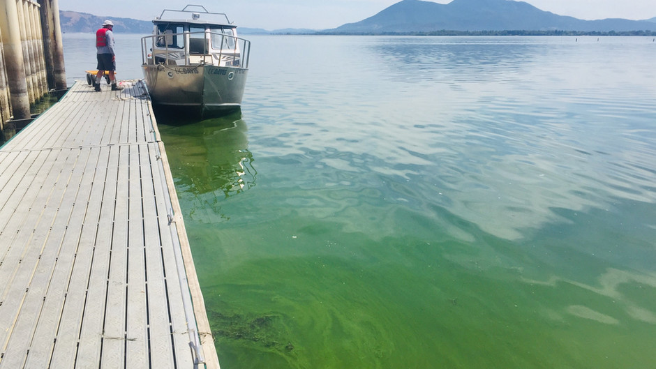 Getting to the Bottom of What Fuels Algal Blooms in Clear Lake