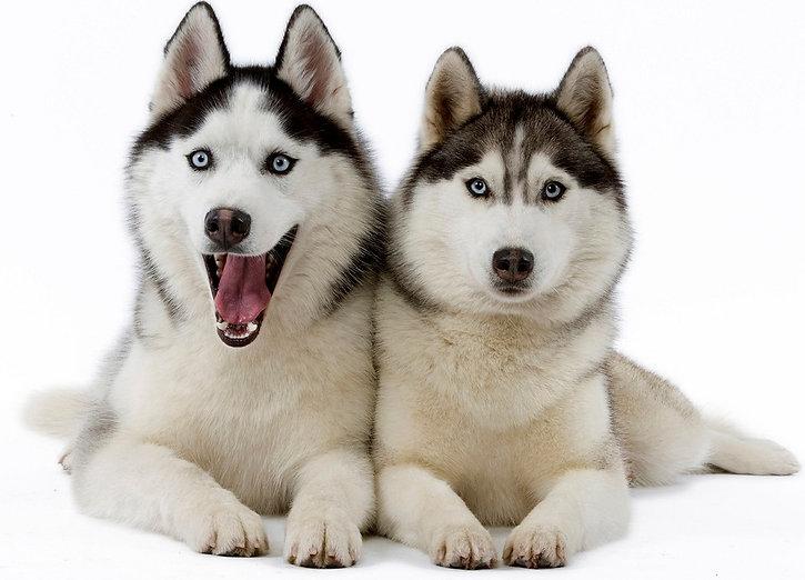 Dog Trainer Training and Sitting in Hamilton, Burlington, Oakville, Mississauga