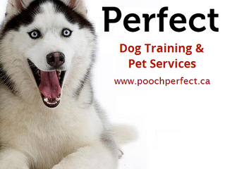 Welcome to the Pooch Perfect Blog!