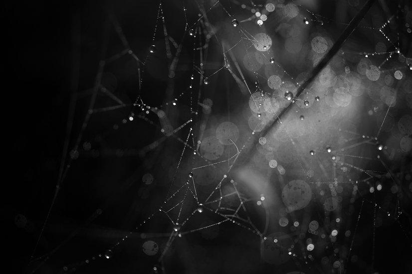 Veronique Chapuy - Stellar Web (7), 2015
