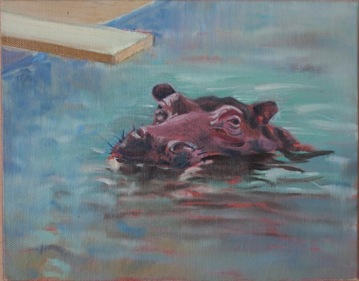 Hipopotamo en piscina, 2016