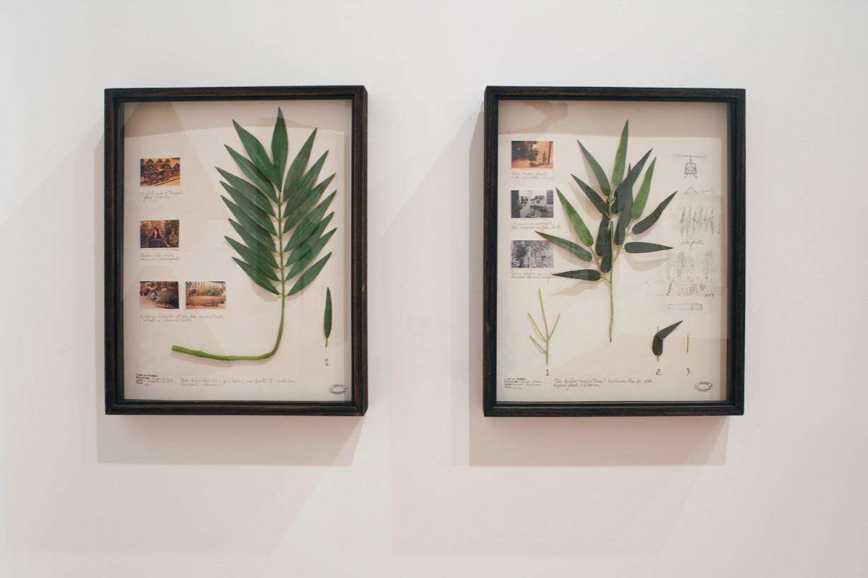 Herbario de plantas artificiales, 2011