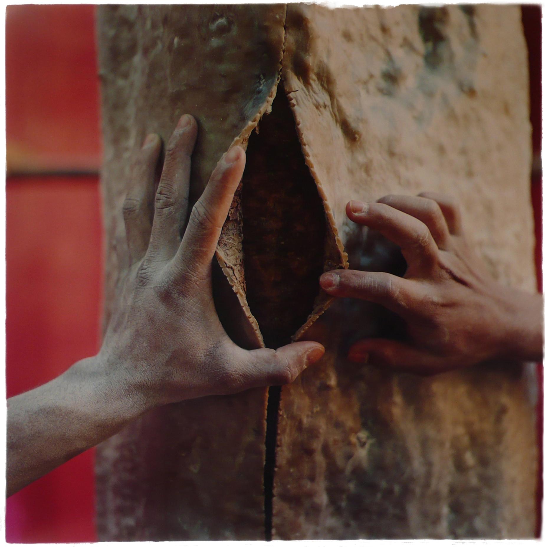 Latex Tree Project, 2006
