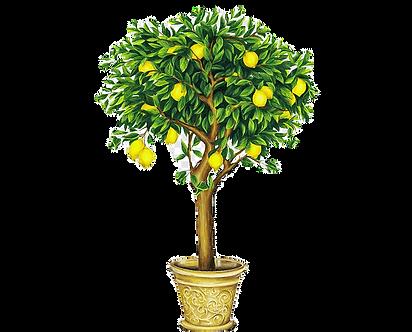 png-transparent-lemon-drawing-fruit-tree