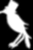 white raven big rapids
