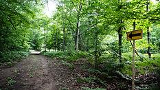 Trail-DSC03419.jpg