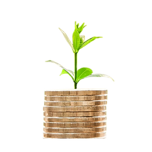 money plant no background.png