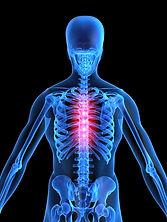 Bone breathing.jpg