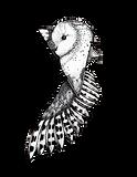 transparentowl.png