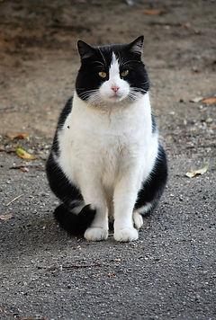 Balou est la mascotte des Chats d'Hauterive