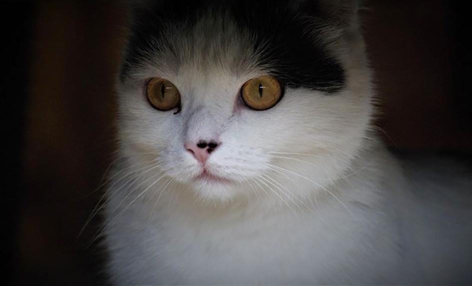 Phibie
