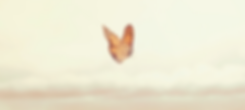 Butterfly%252520Heart%252520and%252520So