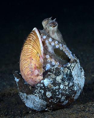 Coconut octopus.jpeg