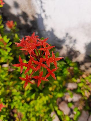 LCEJ Flowers 1 (1).jpg