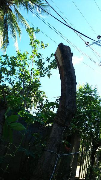 LCEJ GASTER TREE MONKEYS 2.jpg