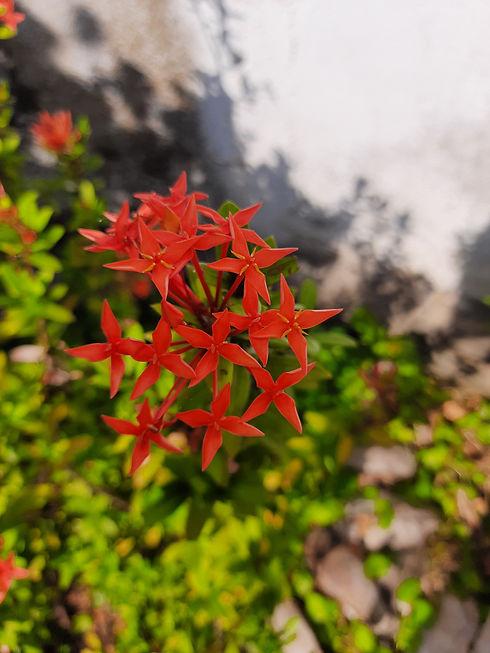 LCEJ Flowers 1.jpg