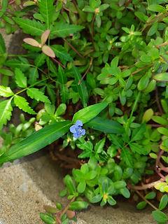 LCEJ Flowers 4 (1).jpg