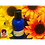 Thumbnail: Rosé Shampoo