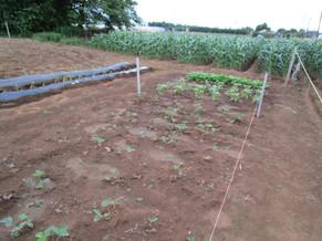 野菜・果実の栽培にチャレンジ