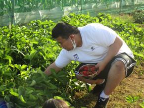 🍓 苺の収穫 🍓